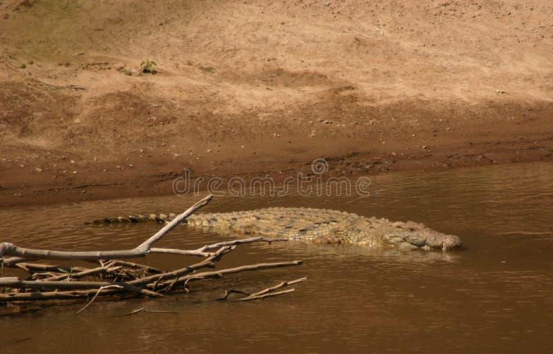 Croc de Mara image stock