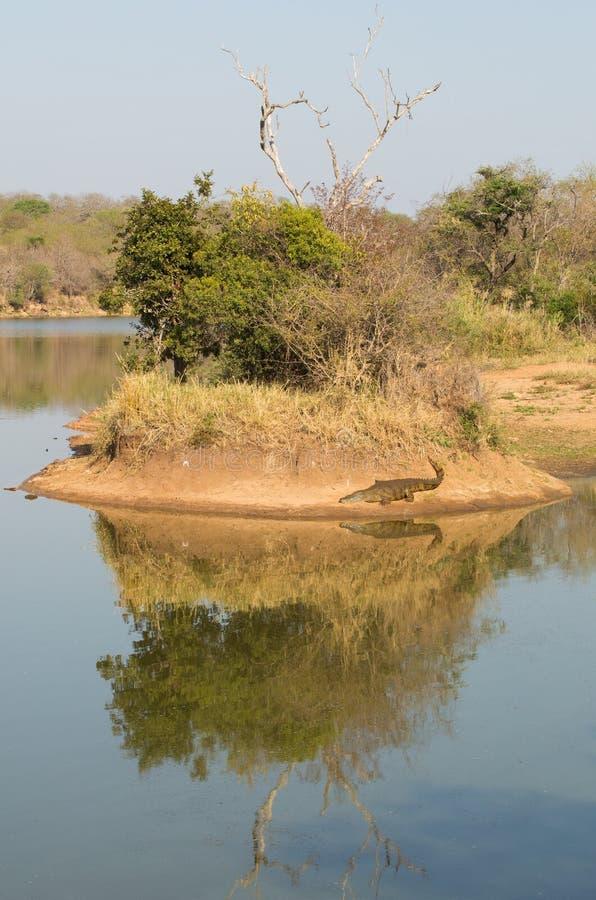Croc Island stock photography