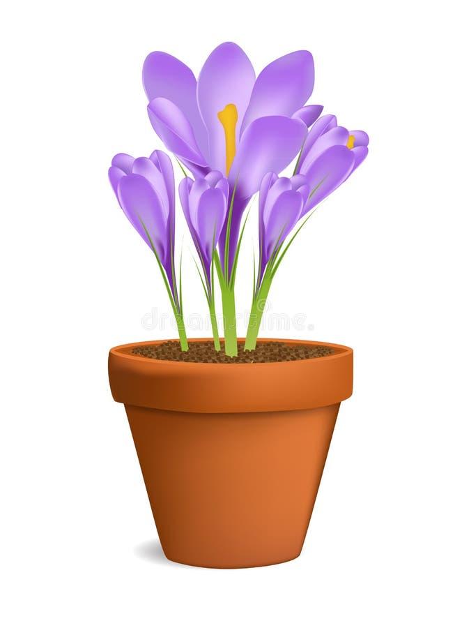 Croco nell'illustrazione di vettore del vaso da fiori isolata illustrazione di stock