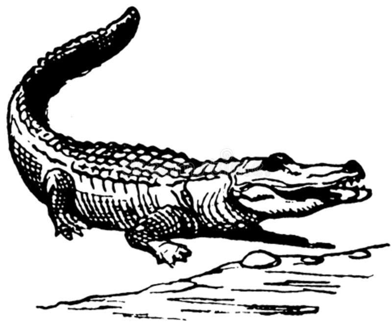 Crocodile-001 Free Public Domain Cc0 Image