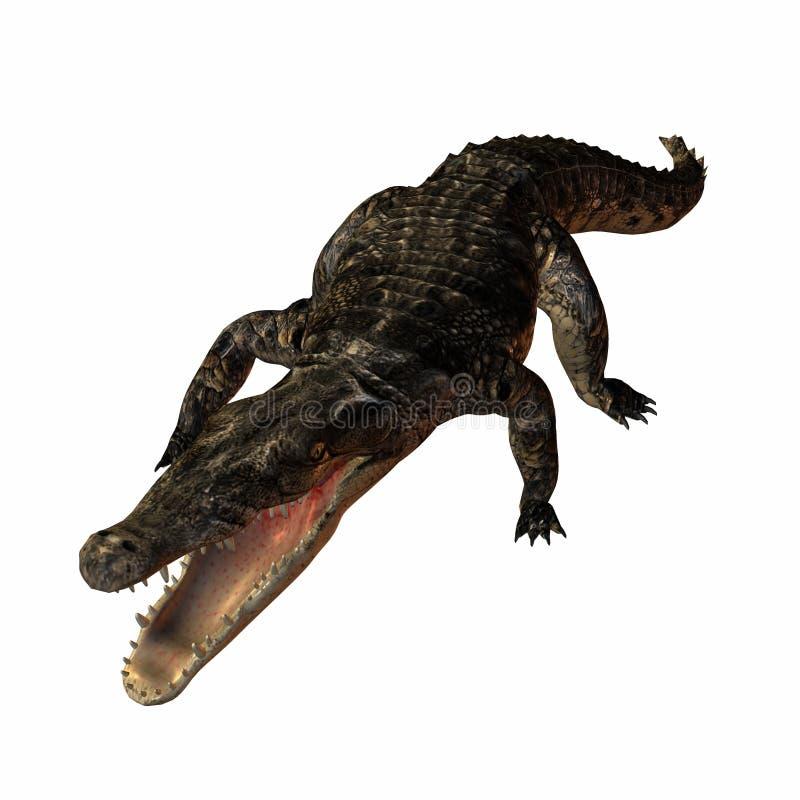 Crocodile illustration libre de droits