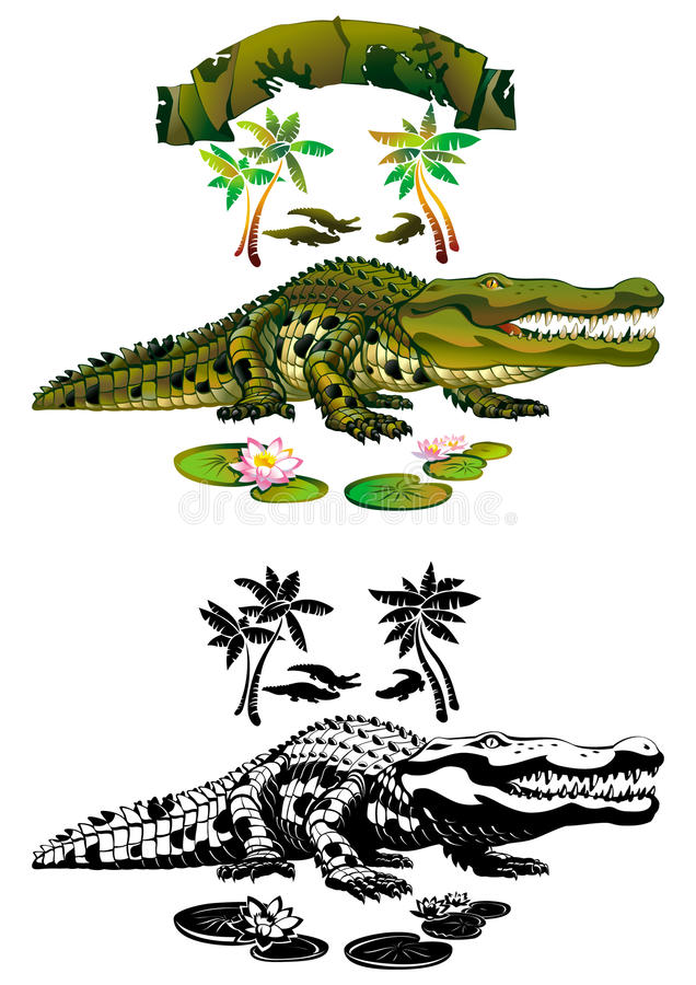 Download Crocodile stock vector. Image of amphibian, toothy, crocodile - 17819420
