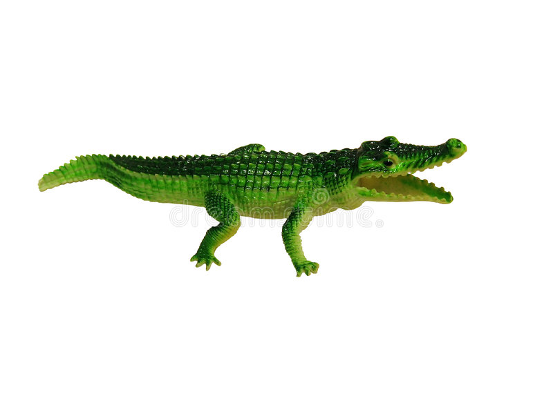 Crocodile. Isolated, clipping path for photoshop, with path, for designer royalty free stock photos