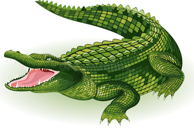 Crocodile. Vector illustration of a big crocodile on white background stock illustration
