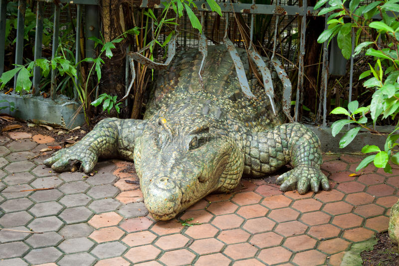 Download Crocodile stock photo. Image of nature, snout, water - 25376688