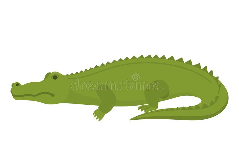 Crocodile or alligator green animal. Wild reptile vector illustration