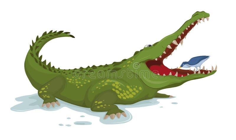 Crocodile and a bird Vector. Cartoon character illustrations vector illustration
