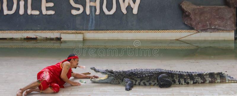 Crocodile d'exposition d'Editorial-6th grand sur le plancher dans le zoo image stock