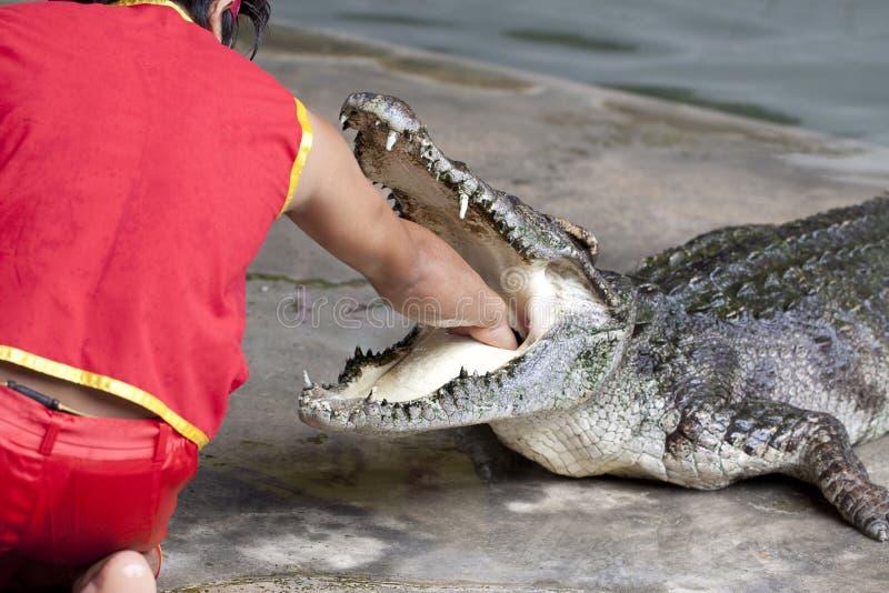 Crocodile dangereux image libre de droits