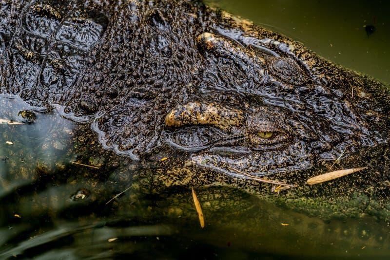 Crocodile dans le zoo photographie stock