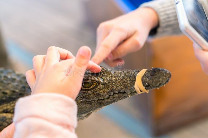 Crocodile du Nil de bébé photographie stock libre de droits