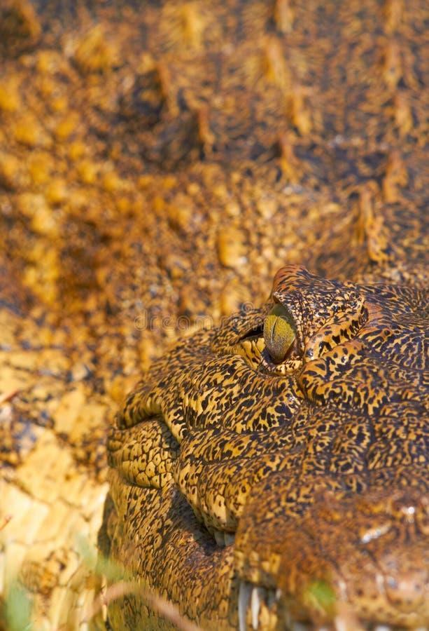 Crocodile Eye Royalty Free Stock Images