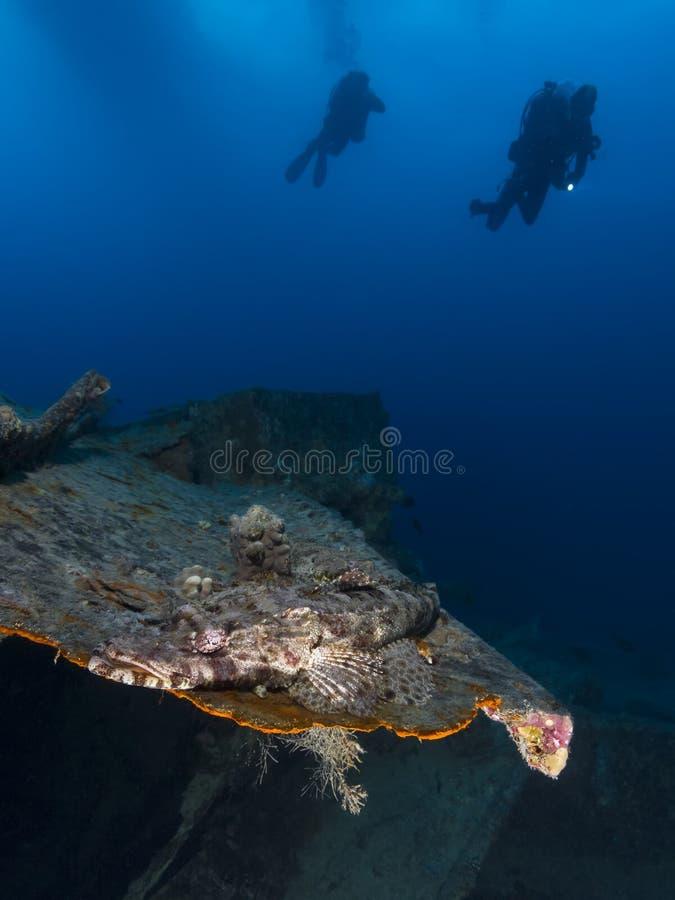 Free Crocodile Fish At The SS Thistlegorm Shipwreck Stock Image - 43632551