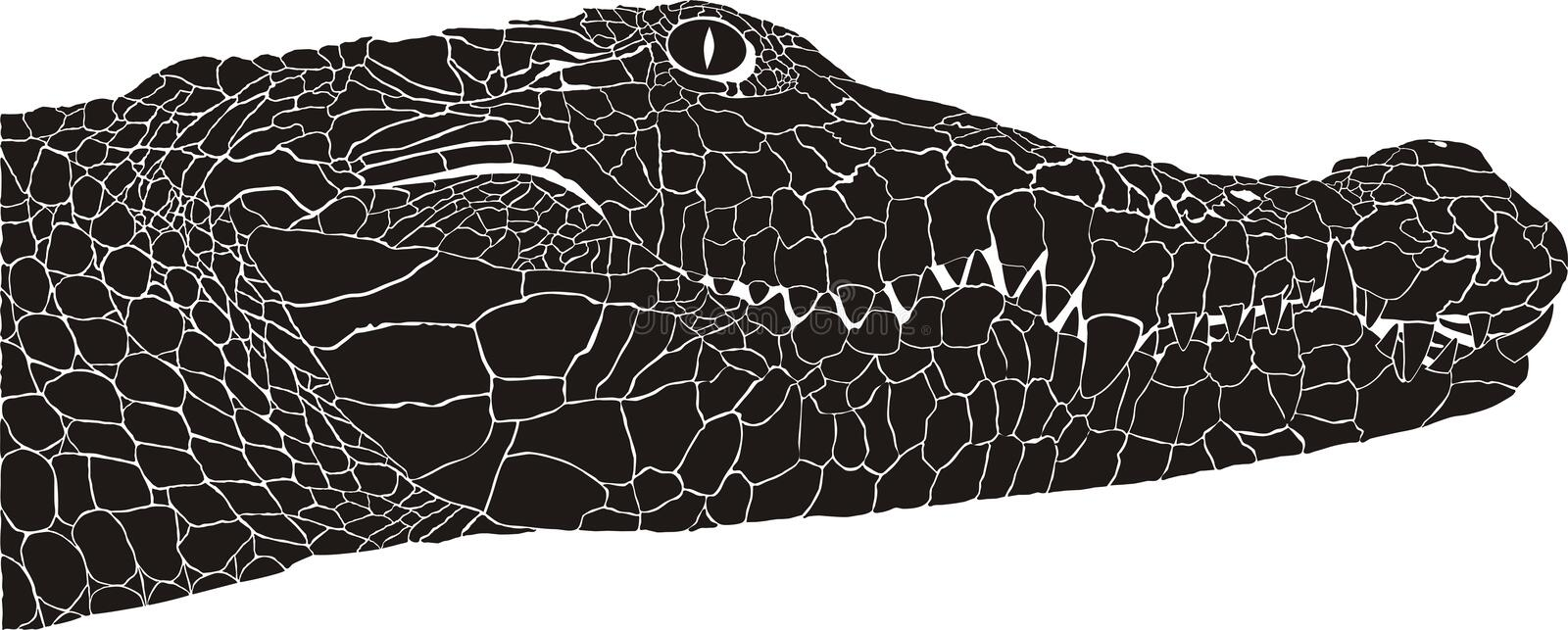 Crocodile head stock illustration