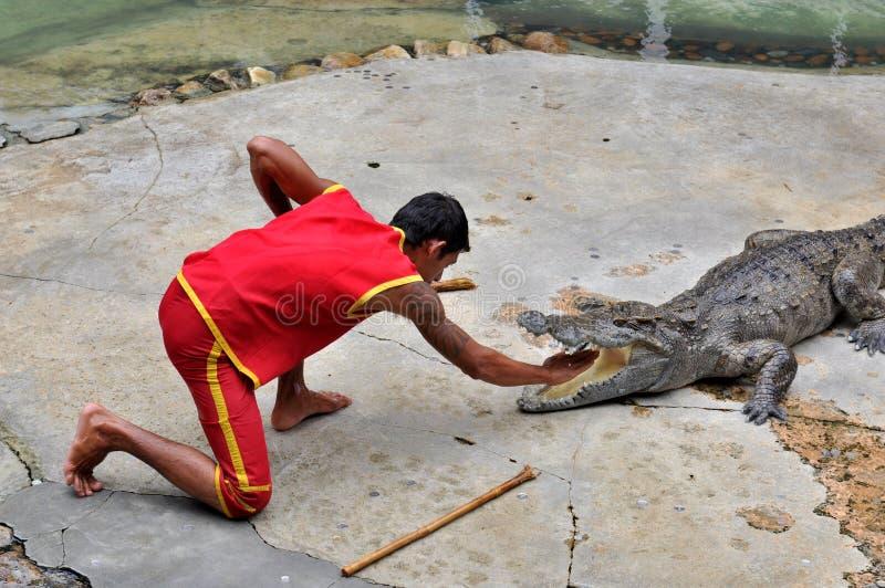 Crocodile Performance