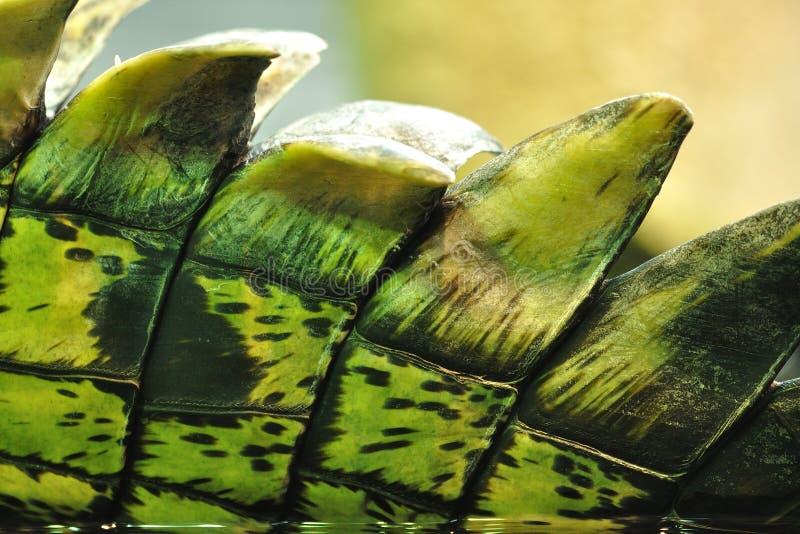 Crocodile skin with barbs royalty free stock photos