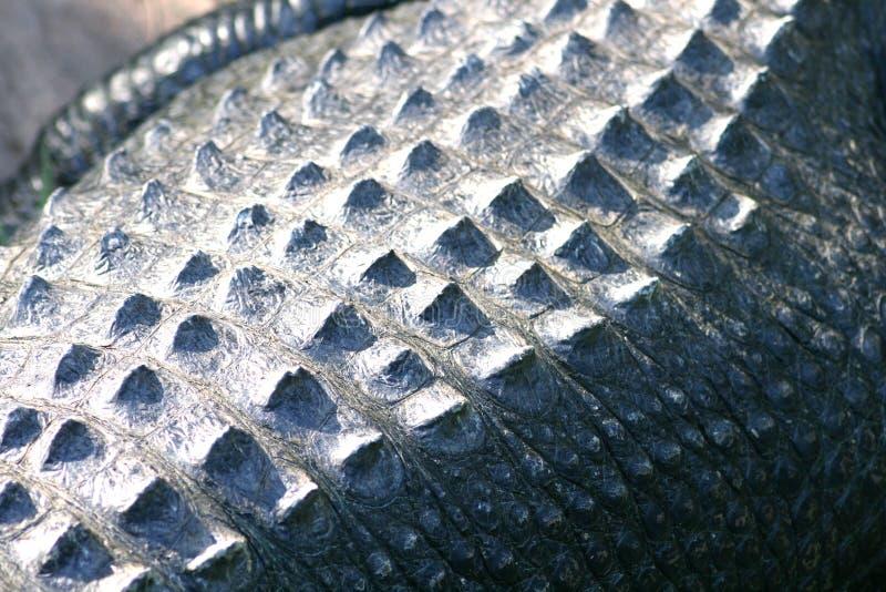 Crocodile skin close up stock image