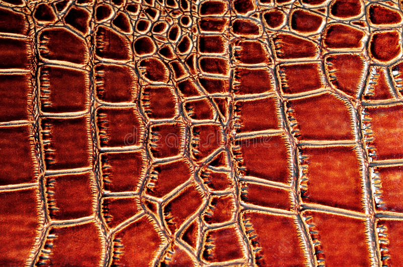 Crocodile skin texture royalty free stock photo