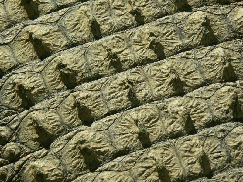 Crocodile skin - texture royalty free stock photos