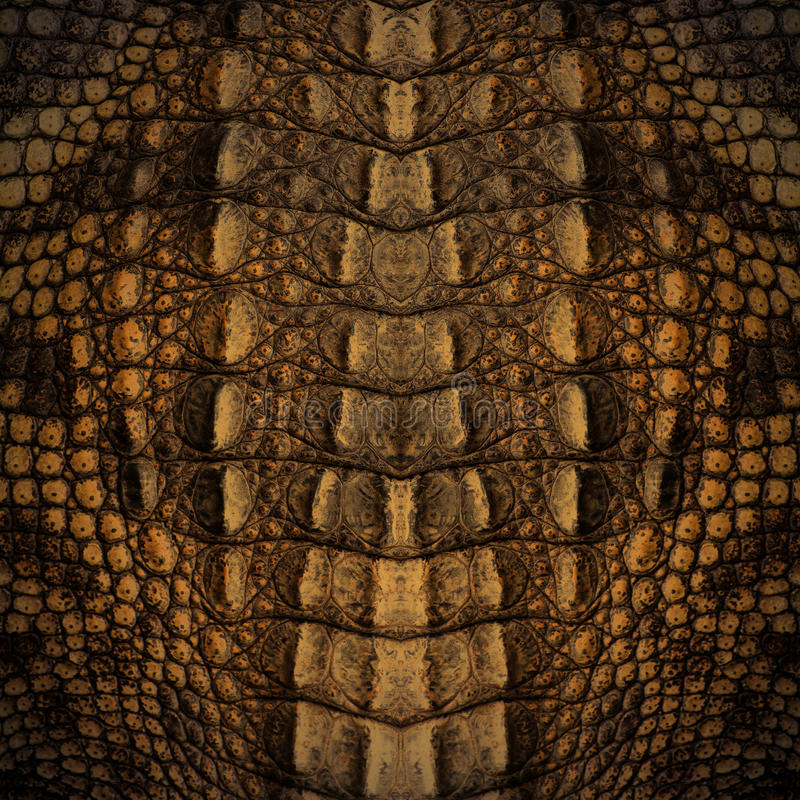 Crocodile skin texture stock images