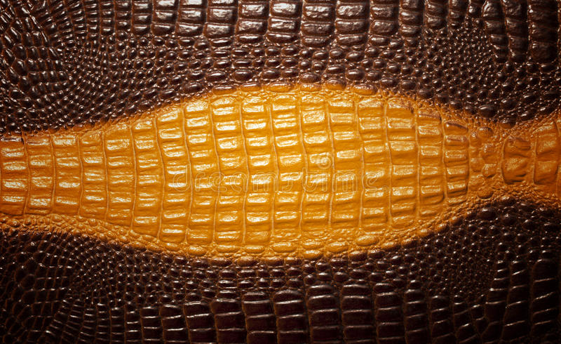 Crocodile skin texture background stock images