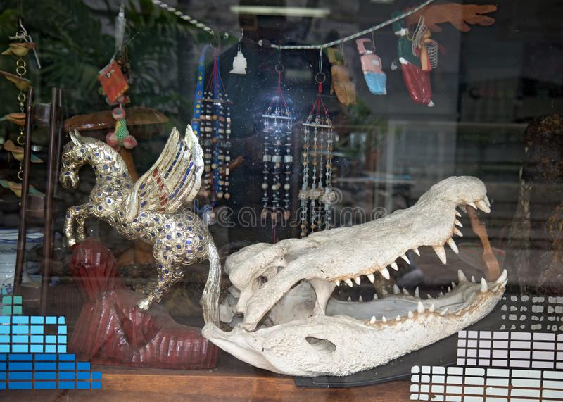 Crocodile skull in the gift shop. Thailand stock images