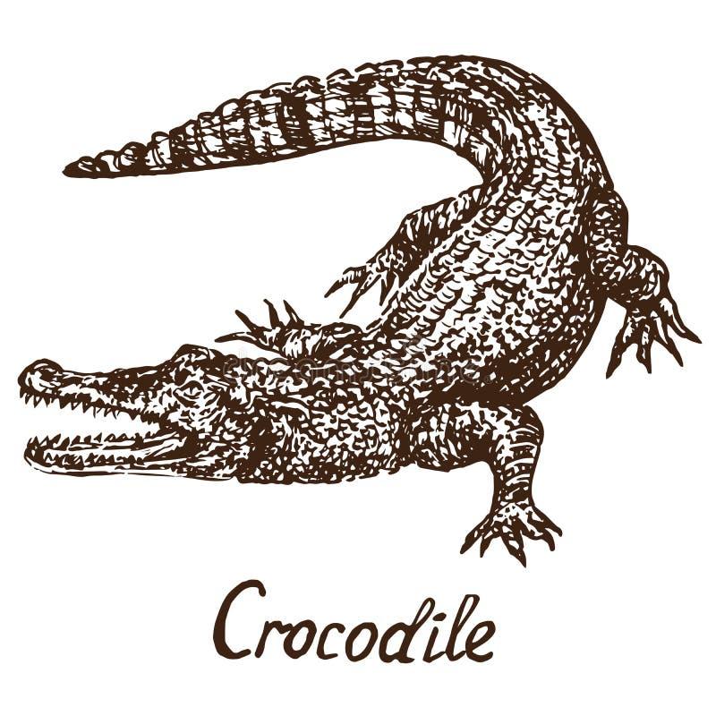Crocodile true crocodile, hand drawn doodle, sketch. Crocodile true crocodile, hand drawn doodle simple drawing vector illustration with inscription stock illustration