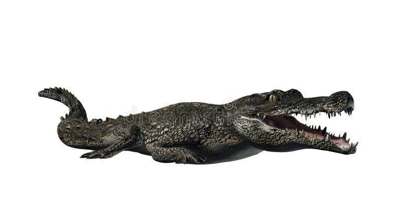 Crocodile on white background stock photos