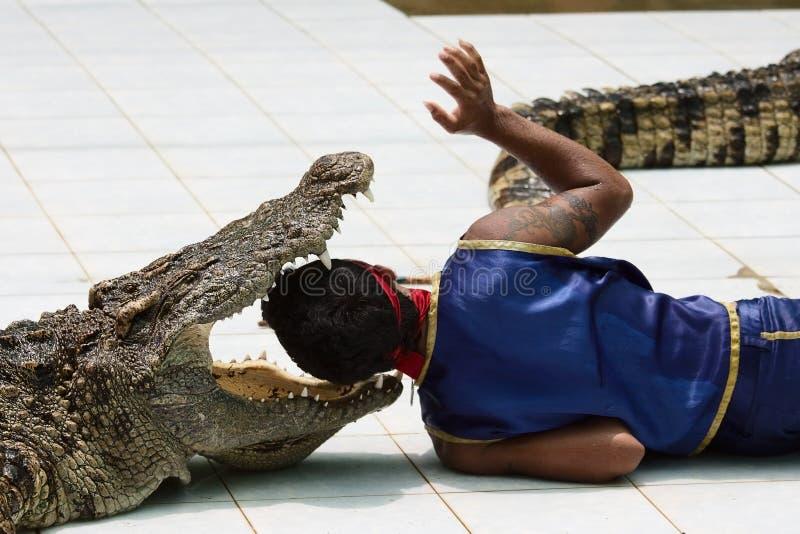 Crocodile wrestler performing a show royalty free stock photos