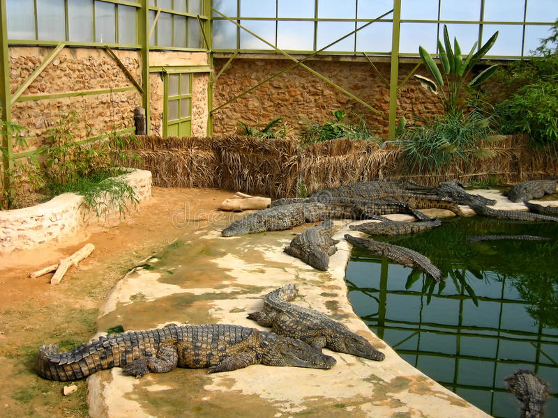 Download The Crocodiles In Winter Pavilion On The Farm On D Stock Photo - Image: 14206616