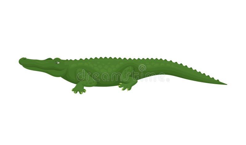Crocodilo, animal anfíbio predatório, ilustração do vetor da vista lateral em um fundo branco ilustração stock