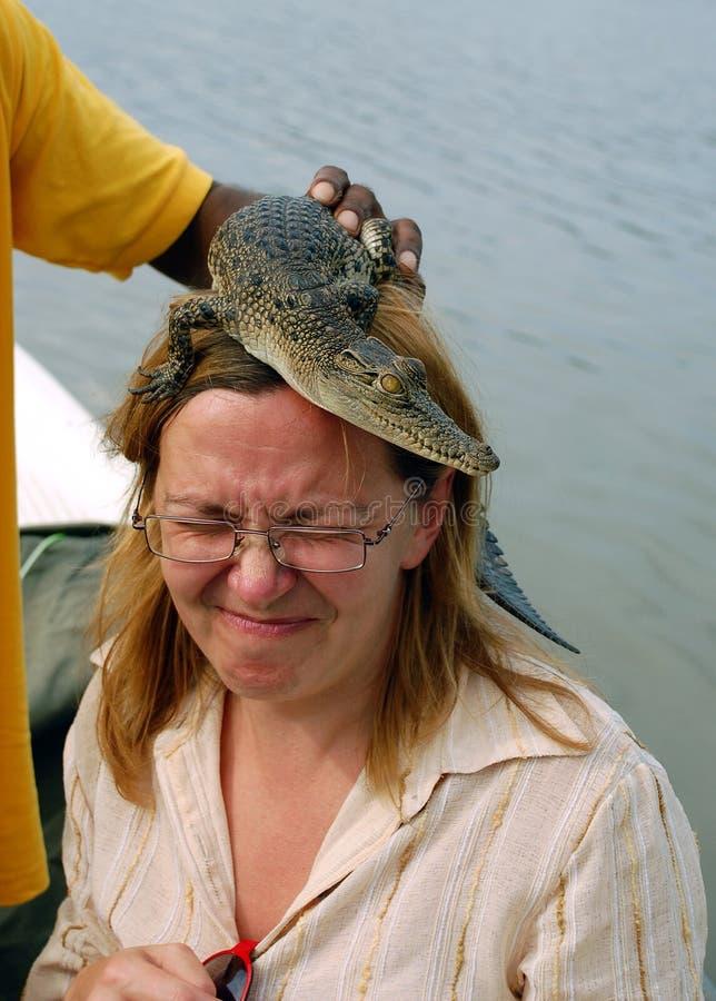 Crocodilo do bebê na cabeça da mulher imagem de stock royalty free