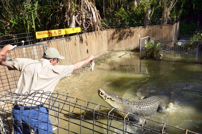 Crocodilo do instrutor e da água salgada durante uma mostra do ataque em Que fotos de stock royalty free