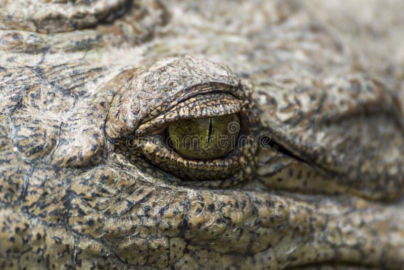 Crocodilo eye em Crocodile Park, Uganda, Pérola de África foto de stock royalty free