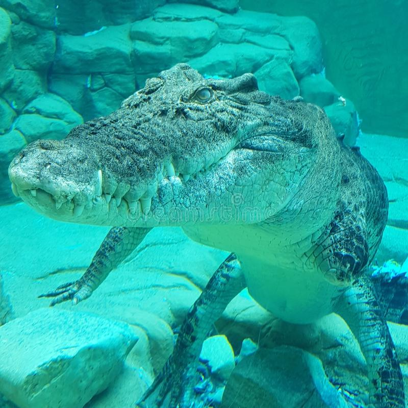 Crocosaurusinham in Darwin, I wouldn& x27; t wil croc ontmoeten die zijn voet weg nam stock fotografie