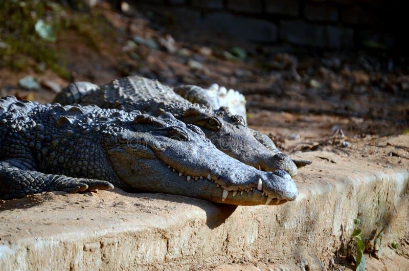 Crocs stock afbeeldingen