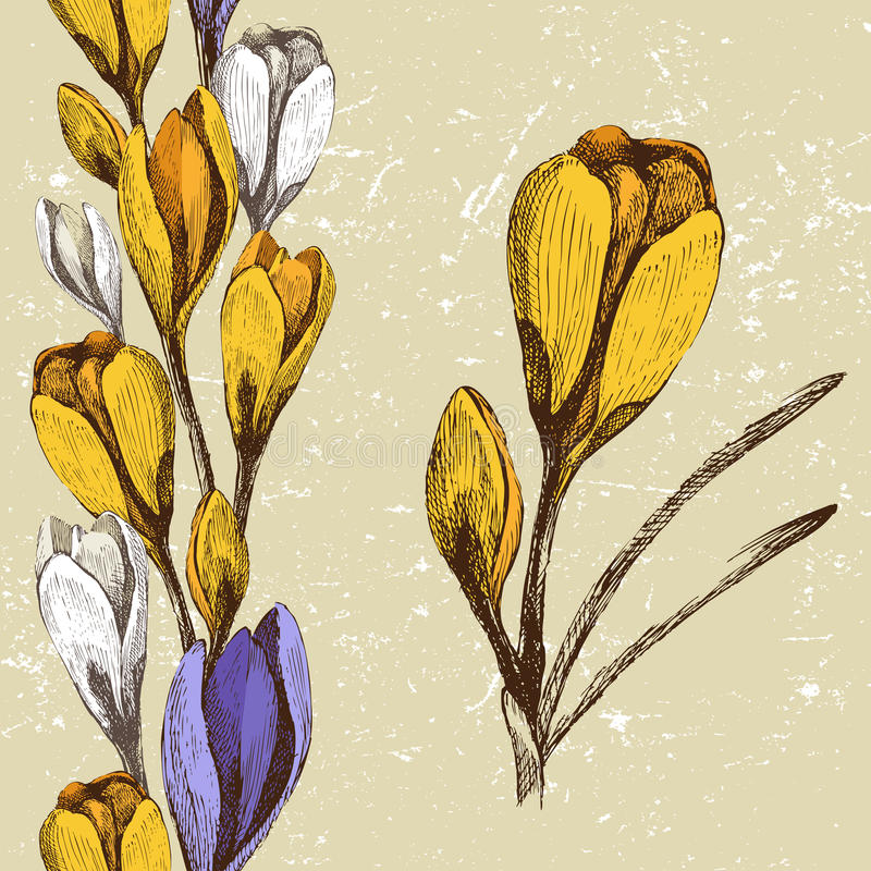 Crocus flower and seamless floral border
