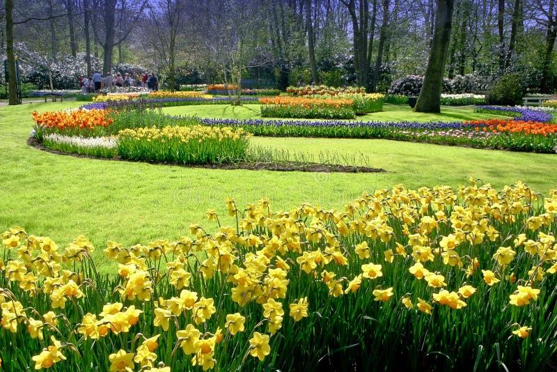 Crocus, Tulips Garden stock photography