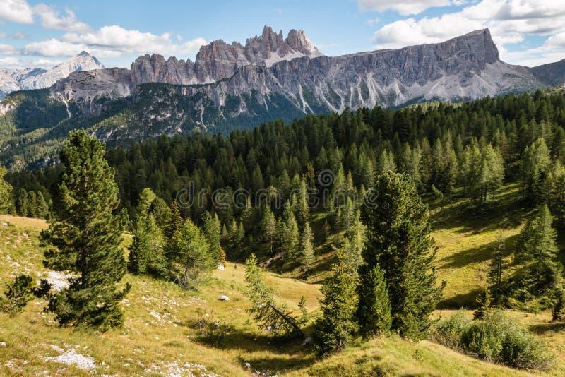 Croda da Lago断层块的针叶树森林南蒂罗尔白云岩的 免版税库存图片