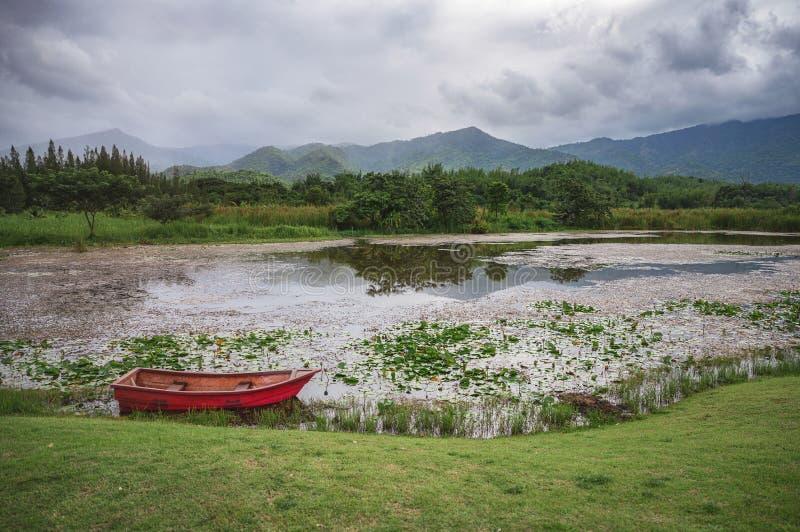 Crogiolo di pagaia rosso che galleggia sulla palude del loto in foresta pluviale fotografia stock