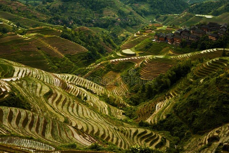 Croisement escarpé de Titian Longji de montagne de terrasse de riz photos stock