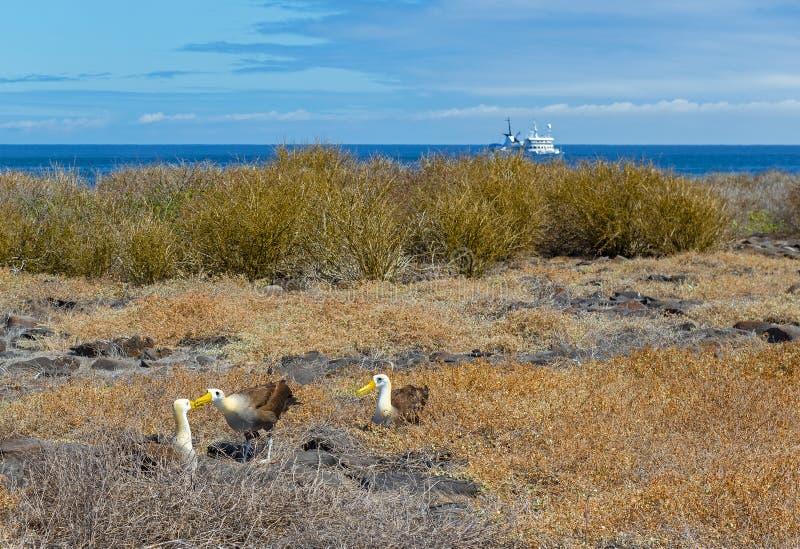 Croisière d'exploration de Galapagos, l'océan pacifique, Equateur images libres de droits