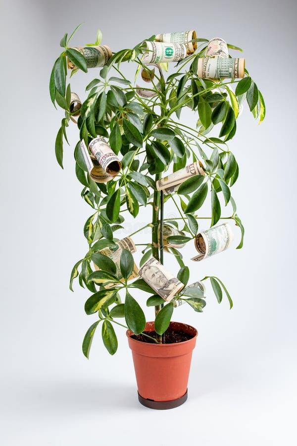 Croissance de finances d'arbre d'argent et concept d'affaires, investissement image stock