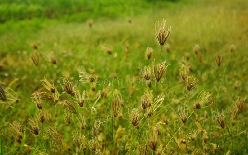 Croissance de plantes photo stock