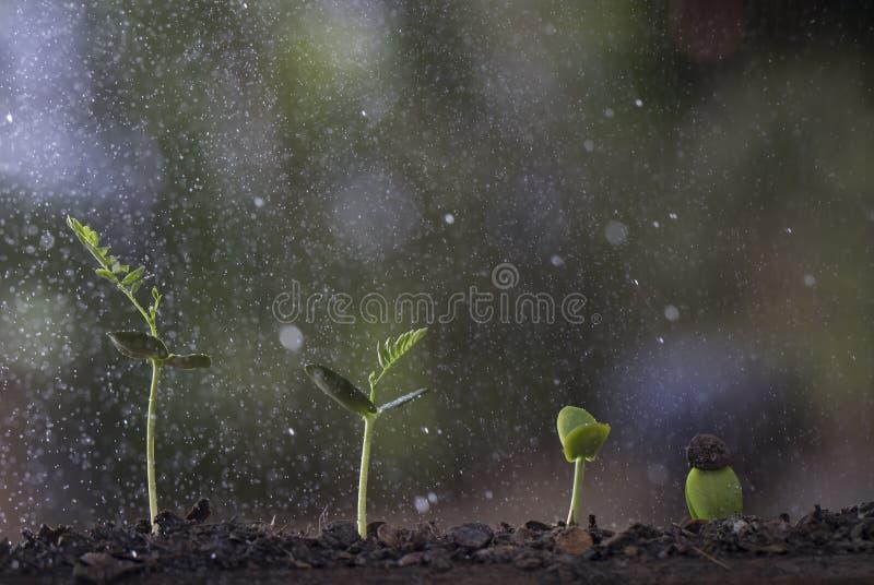 Croissance de plantes d'arbre de graine à l'arrière-plan de nature images stock