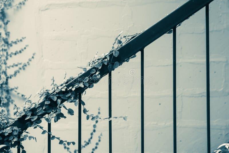 Croissance de plantes verte de lierre à la balustrade de cru Architectural extérieur photographie stock libre de droits