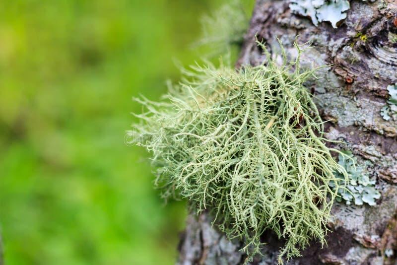 Croissance verte de fougère sur l'écorce de l'arbre Foyer sélectif sur la fougère a photos libres de droits