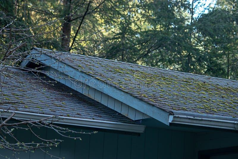 Croissance verte moussue sur la ligne de toit de la vieille maison images libres de droits