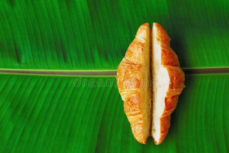 Croissant. The croissant cut in the middle for stuffing placed on a bright green banana leaf stock photography