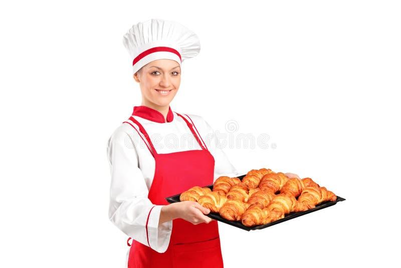 Croissants di recente cotti femminili della holding del panettiere fotografia stock